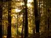 New Forest in Autumn - (C) David Heys