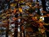Leaves in fall - (C) David Heys